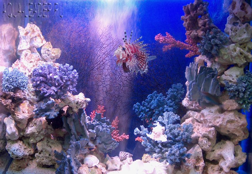 Морское оформление аквариума