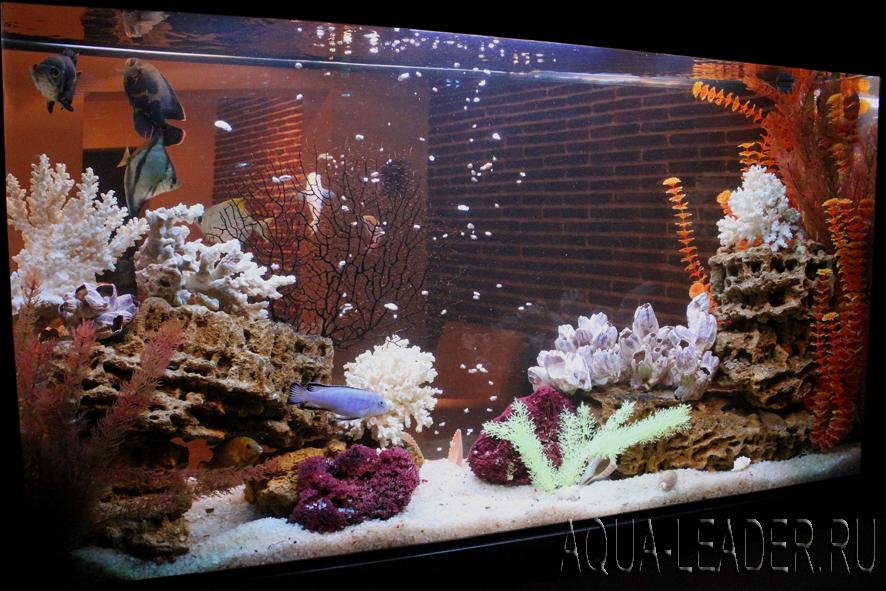 Псевдоморское оформление аквариума